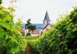Burgundy Wine Tasting & Winery Tours