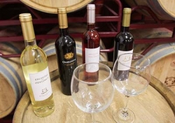 Quinta do Frances Winery - Quinta de Mata-Mouros Winery