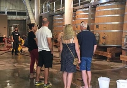 Pic Saint Loup - Olive oil mill - Wineries